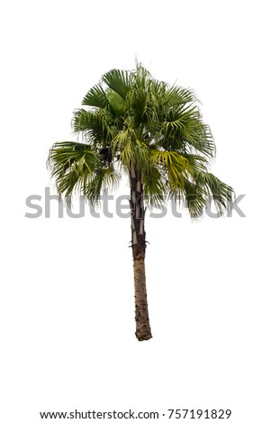 Isolated palm tree. palm tree with white background. Die cut palm tree.  - Shutterstock ID 757191829