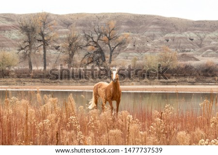 Isolated palomino Wild Horse standing by the green river #1477737539