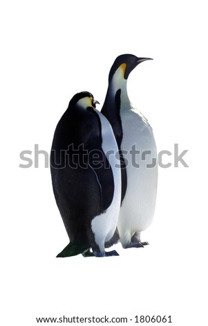 Isolated Penguins