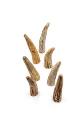 Isolated photos of elk horn slices