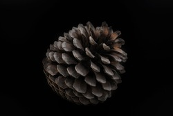 Isolated pictures of pinecones with black background.