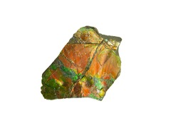 isolated piece of an ammolite fossil
