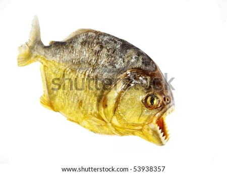 isolated piranha
