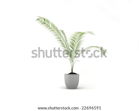 Isolated Plant