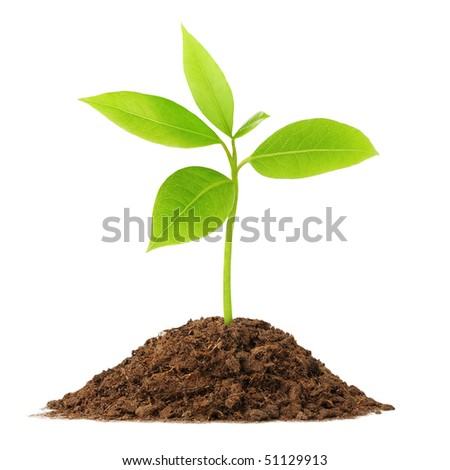 Isolated plant. Young green sprout growing from pile of soil isolated on white background