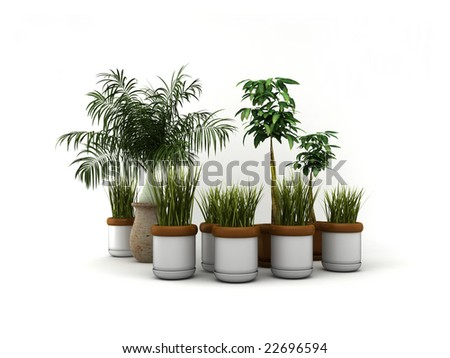 Isolated plants