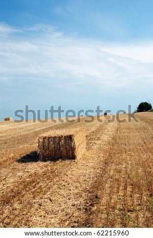 isolated rectangular bales of hay