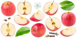 Isolated red apples. Collection of whole and cut  red apples of dofferent shapes, leaves and apple blossom isolated on white background