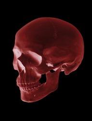 isolated red cranium