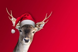 isolated reindeer in front of red background