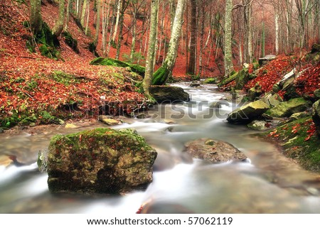 isolated rock into the stream in autumn