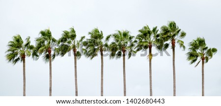 Isolated row of palm trees in vivid colors  with an overcast blue sky in the background #1402680443