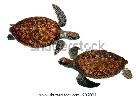 Isolated sea turtles