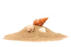 Isolated seashell on sand, white background