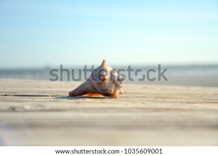 isolated shell laying on a sandy boardwalk with ocean & blue sky in background.