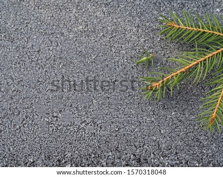 Isolated spruce branche sand a small branch of juniper on the background of frost crystals closeup. Coniferous plants pattern with hoarfrost for decoration and design.