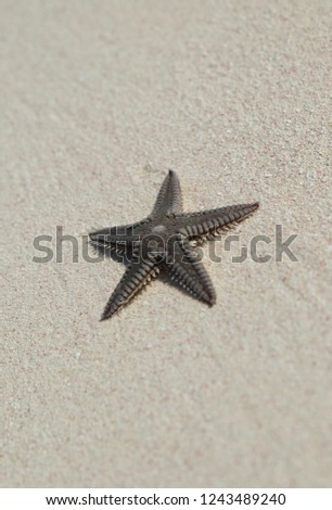 Isolated starfish on the sand during low tide with selective focus. Travel vacation holidays destination - white sand Caribbean beach.