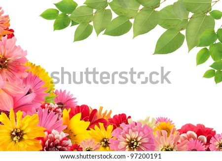 Isolated Summers flowers and leaves floral collage postcard