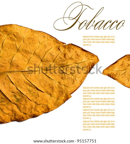 isolated tobacco leaves on a white background