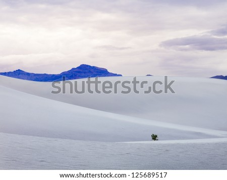 Isolated tree growing on a sand dune in Death Valley.