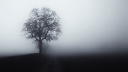 Isolated tree in fog surrounded by mysterious gloomy landscape. Late autumn, South Moravia,Europe.