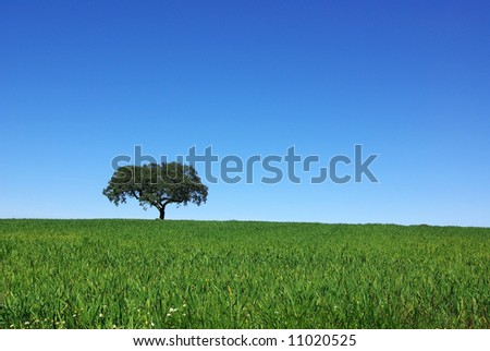 Isolated tree in the green field of alentejo.