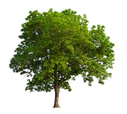 isolated tree  is located on a white background. Collection of isolated tree on white background