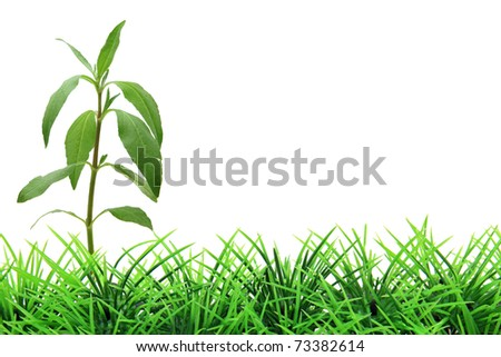 isolated tree on green grass - stock photo