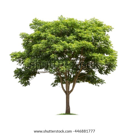 Isolated tree on white background - Shutterstock ID 446881777