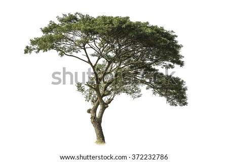 isolated tree on white with clipping path #372232786