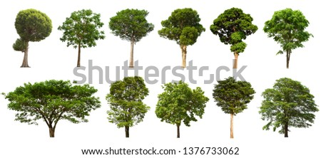 Isolated tree set Located on a white background, large images are suitable for all types of work. #1376733062