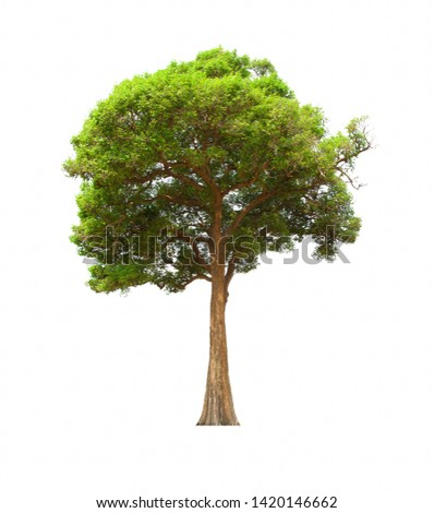 Isolated tree Set on a white background