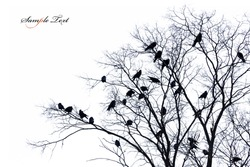 Isolated tree silhouette with crows on the branch