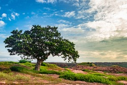 isolated tree with amazing blue sky background from different angles image is taken at badami karnataka india. it is showing the pristine contrasty bauty of nature.