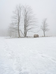 Isolated trees and forgotten bale of hay in the snow. Winter wonderland with snow on hill and trees.