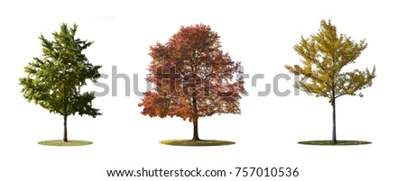 ISOLATED TREES ON WHITE BACKGROUND #757010536