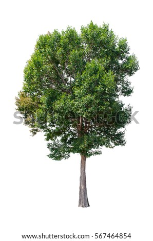 Isolated trees on white background , The collection of trees. - Shutterstock ID 567464854