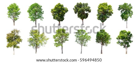 Isolated trees on white background. The collection of trees. - Shutterstock ID 596494850