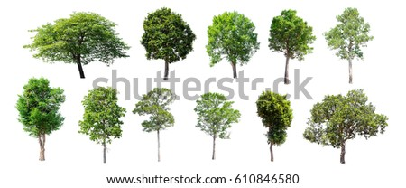 Isolated trees on white background , The collection of trees. - Shutterstock ID 610846580
