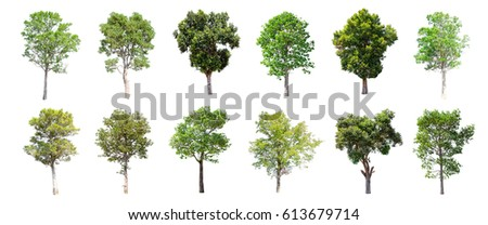 Isolated trees on white background , The collection of trees. - Shutterstock ID 613679714