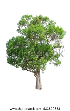 Isolated trees on white background , The collection of trees. - Shutterstock ID 633820388