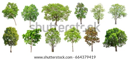 Isolated trees on white background , The collection of trees. - Shutterstock ID 664379419