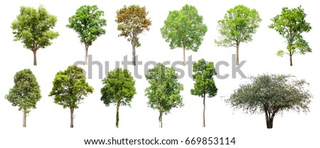 Isolated Trees on white background , The Collection of trees. #669853114