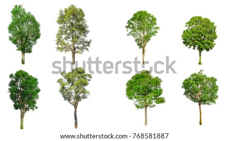 Isolated trees on white background , The collection of trees.beatiful autumnal colors - Shutterstock ID 768581887