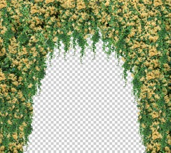 isolated Tunnel leaves Green and Yellow flower vines on white background.Arch of white climbing . Wedding decoration.