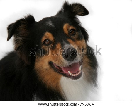 Isolated view of a smiling dog