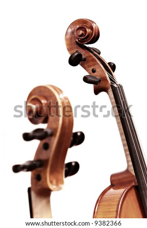 isolated violins on white background - stock photo