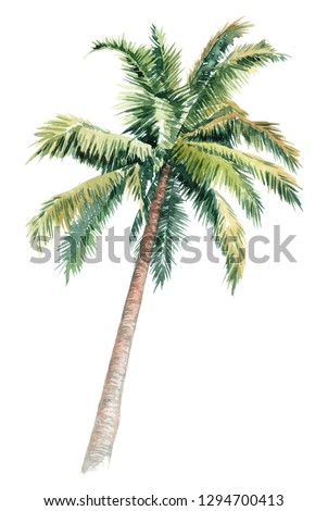 Isolated watercolor clipart with palm trees. picturesque image of a palm tree. palm tree on the beach