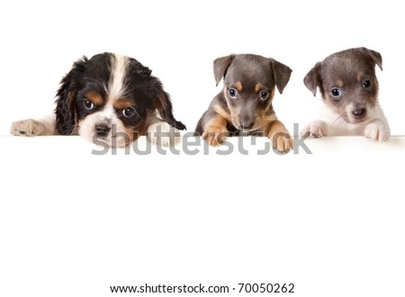 Isolated 6 weeks old puppy dogs with a white message