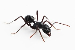 Isolated worker ant